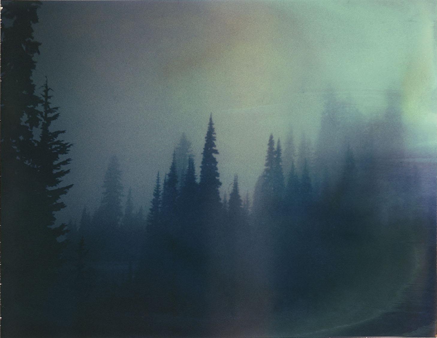 fogtrees002_1.jpg