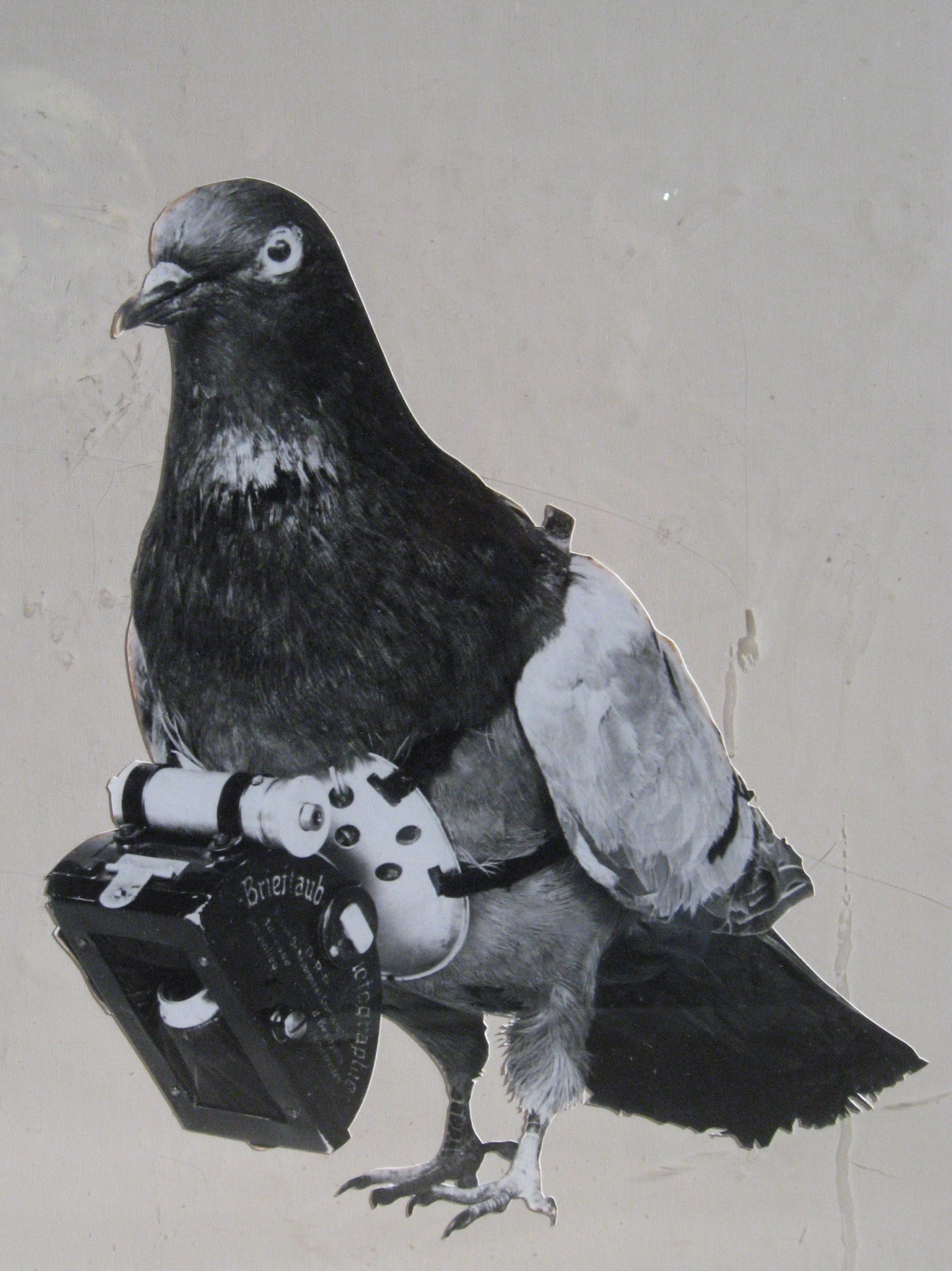 Dr_Julius_Neubronner_patented_a_miniature_pigeon_camera_activated_by_a_timing_mechanism,_1903.jpg