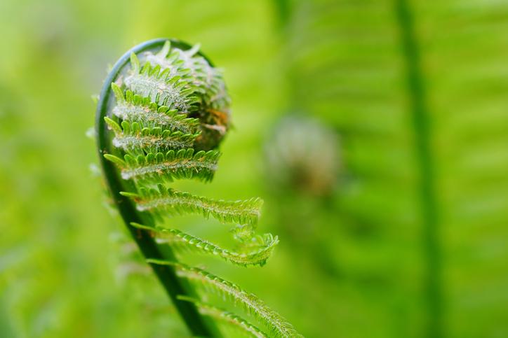 Spring Equinox Circle | Healing Herbs | Titusville NJ