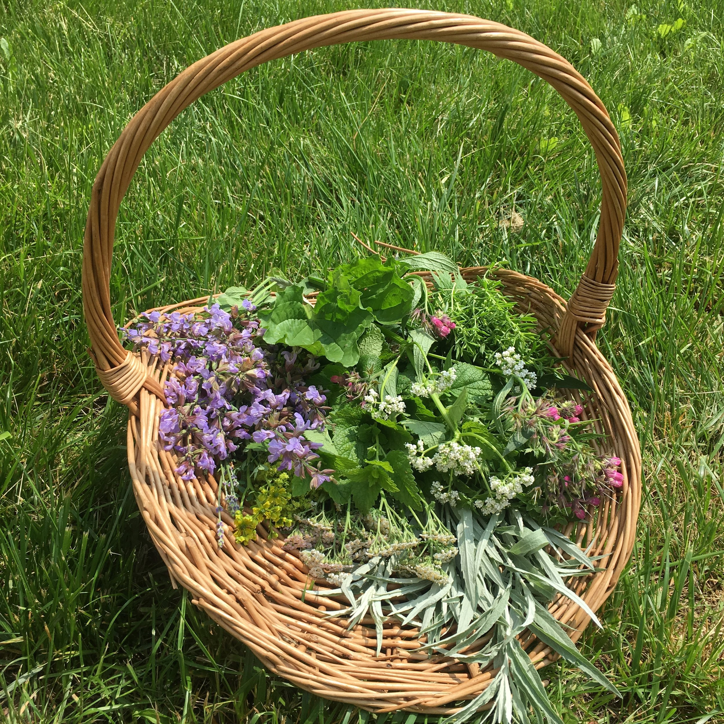 We harvest into baskets. It's pretty.