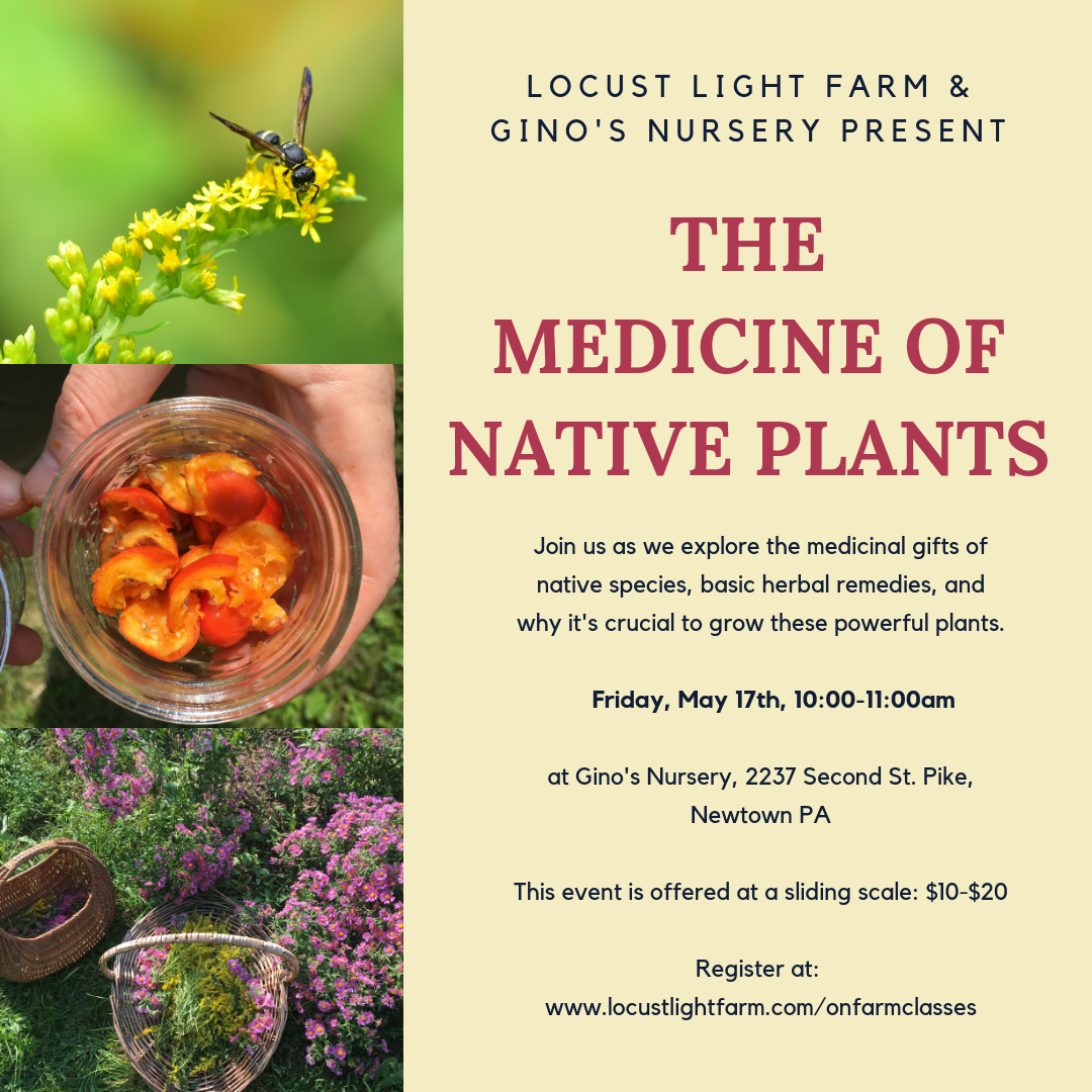 Making medicine with Native plants.png