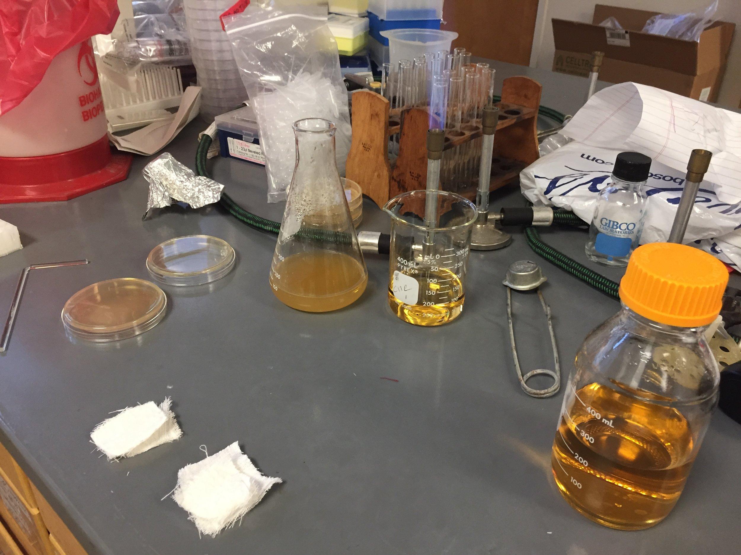 preparing for bacterial exposure