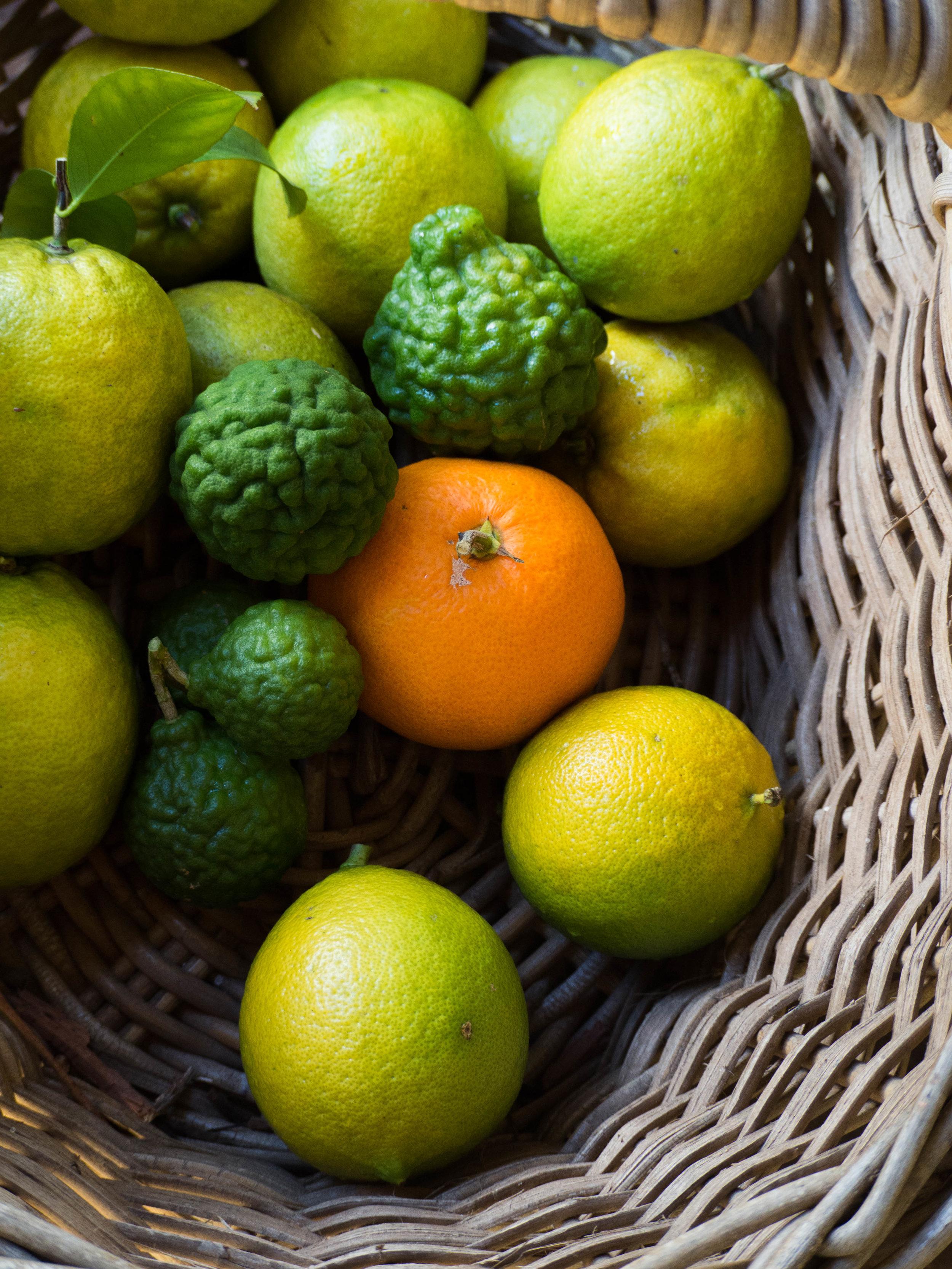 Homegrown citrus picked fresh from the garden - (top to bottom) lemonades, kaffir limes, mandarin & bergamots.