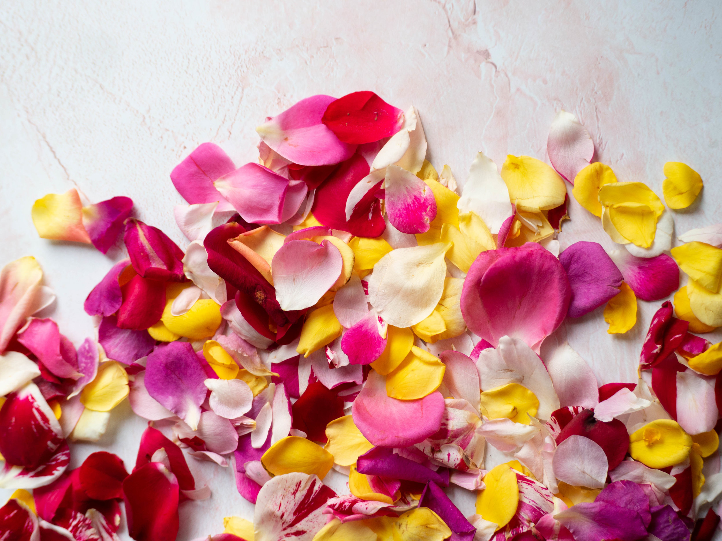 Fresh Edible Rose Petals
