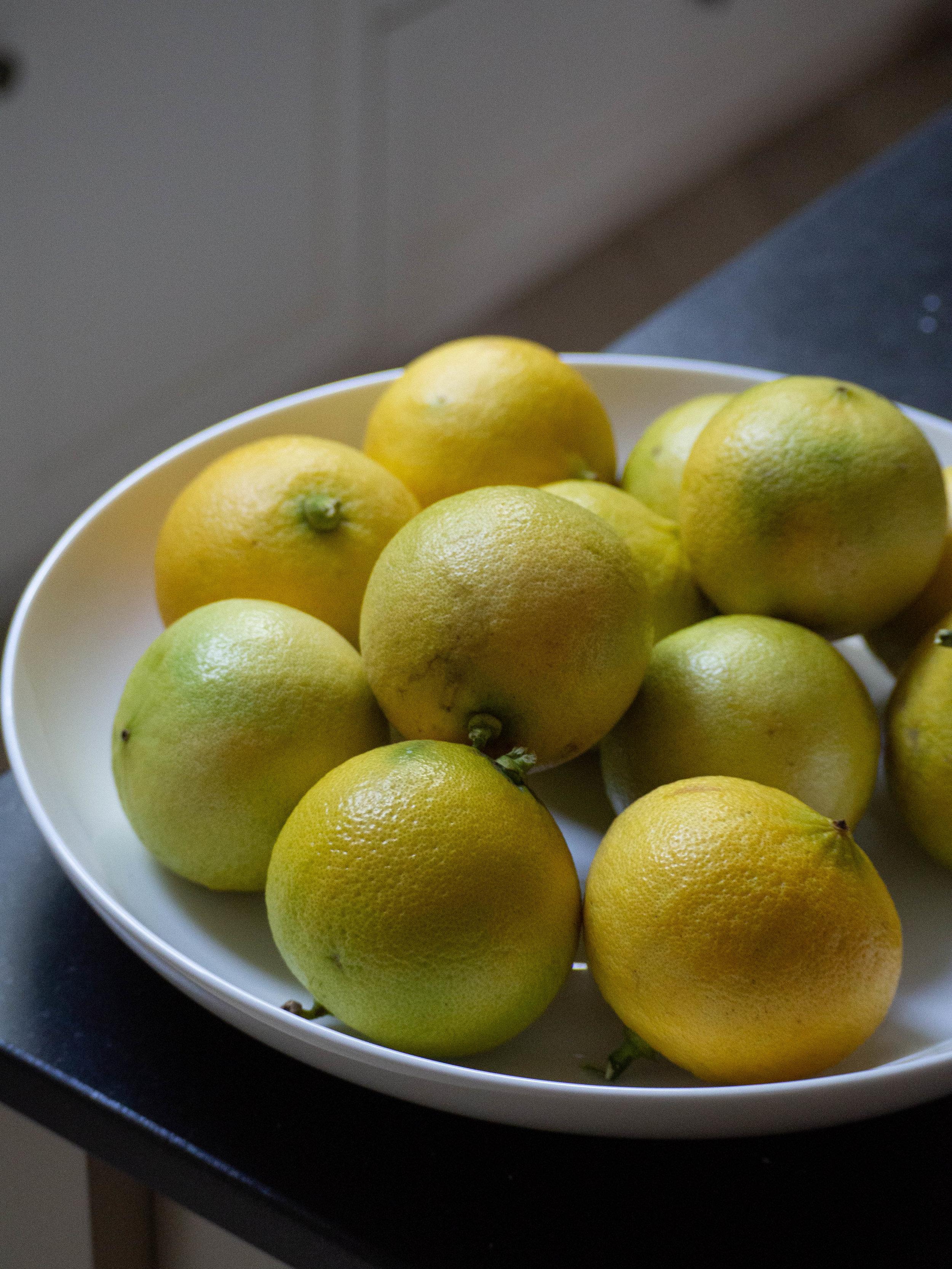 Homegrown Bergamots