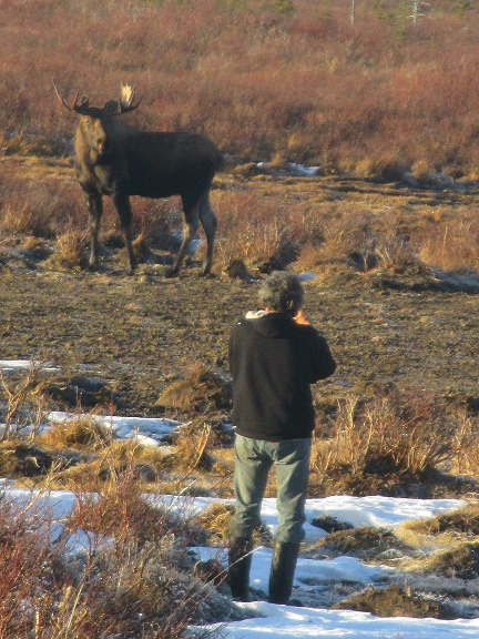 moose tour photos.jpg