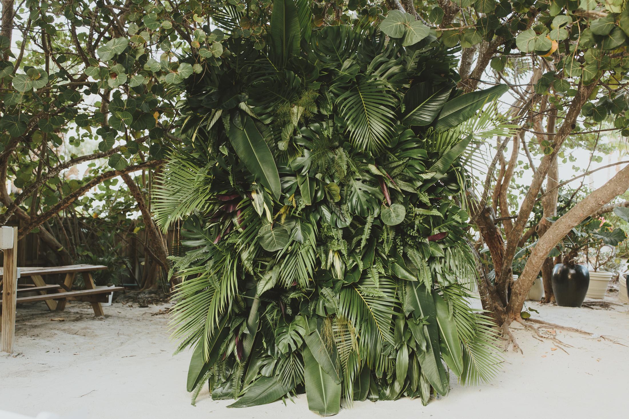 Tricia + Dan Plants