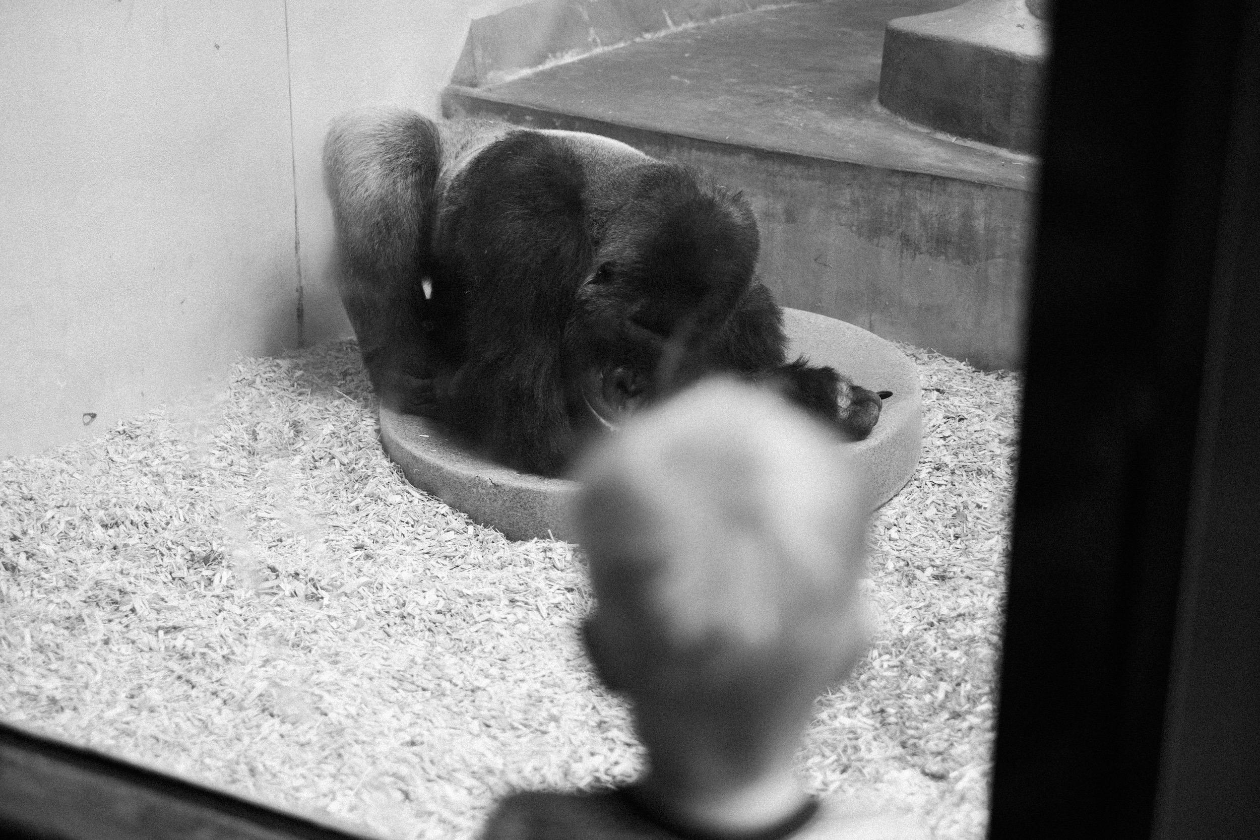 The Denver Zoo - 18.jpeg