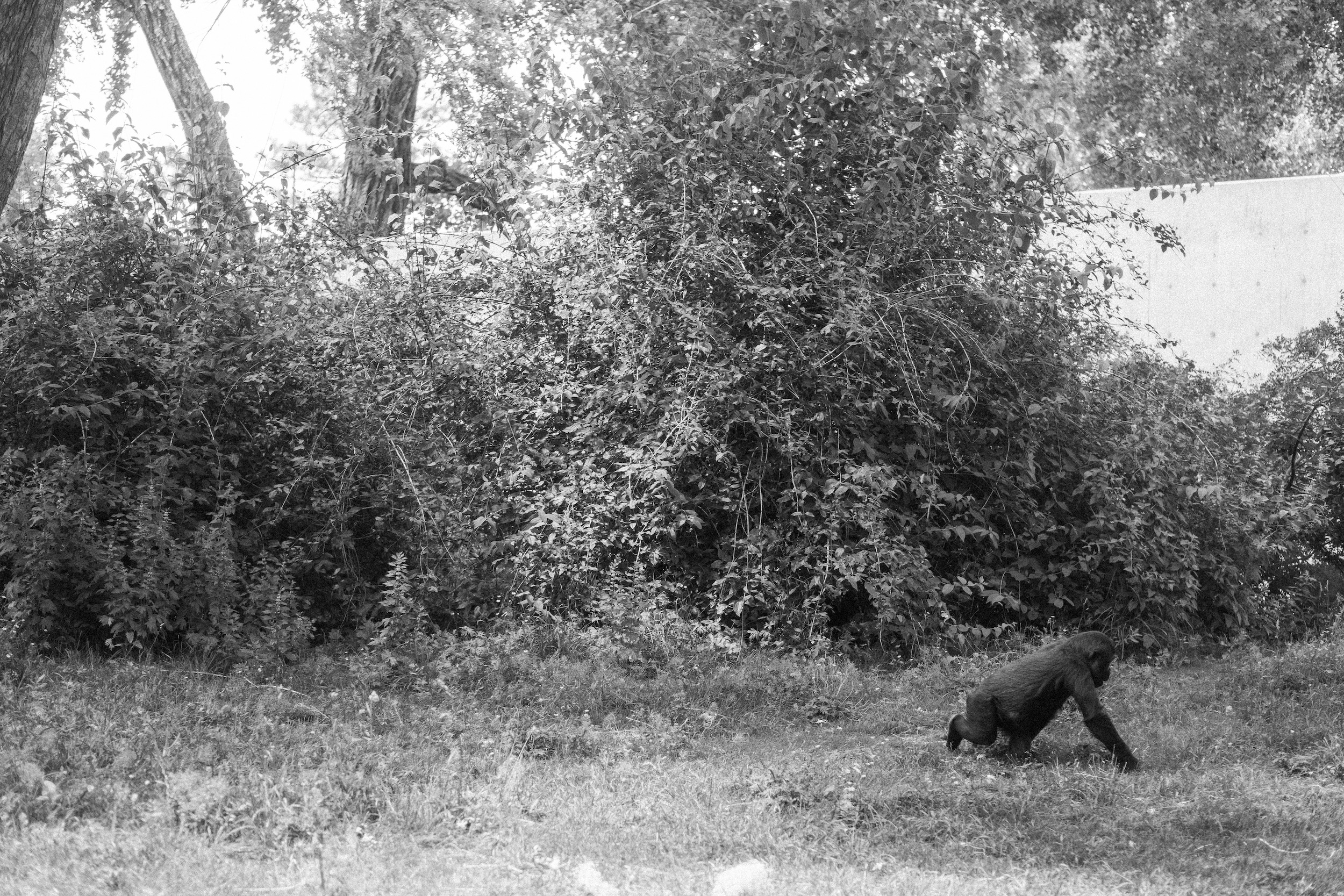 The Denver Zoo - 29.jpeg