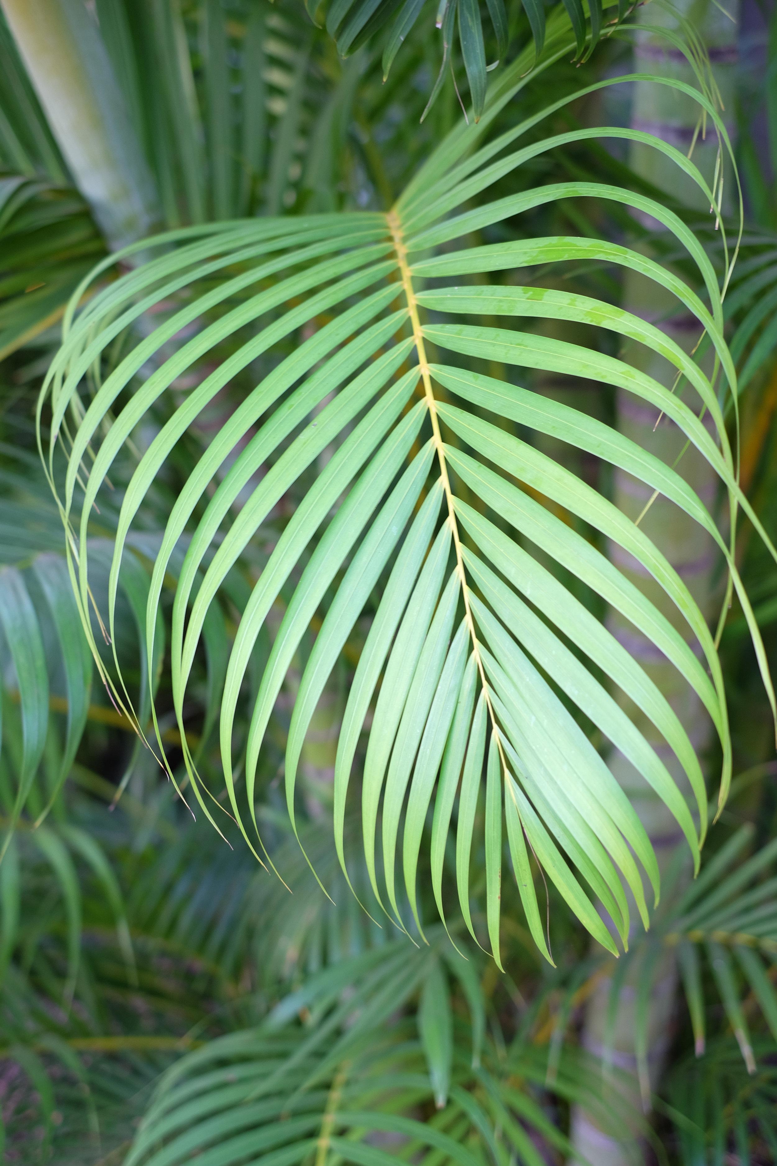 Maui-Greens.jpg