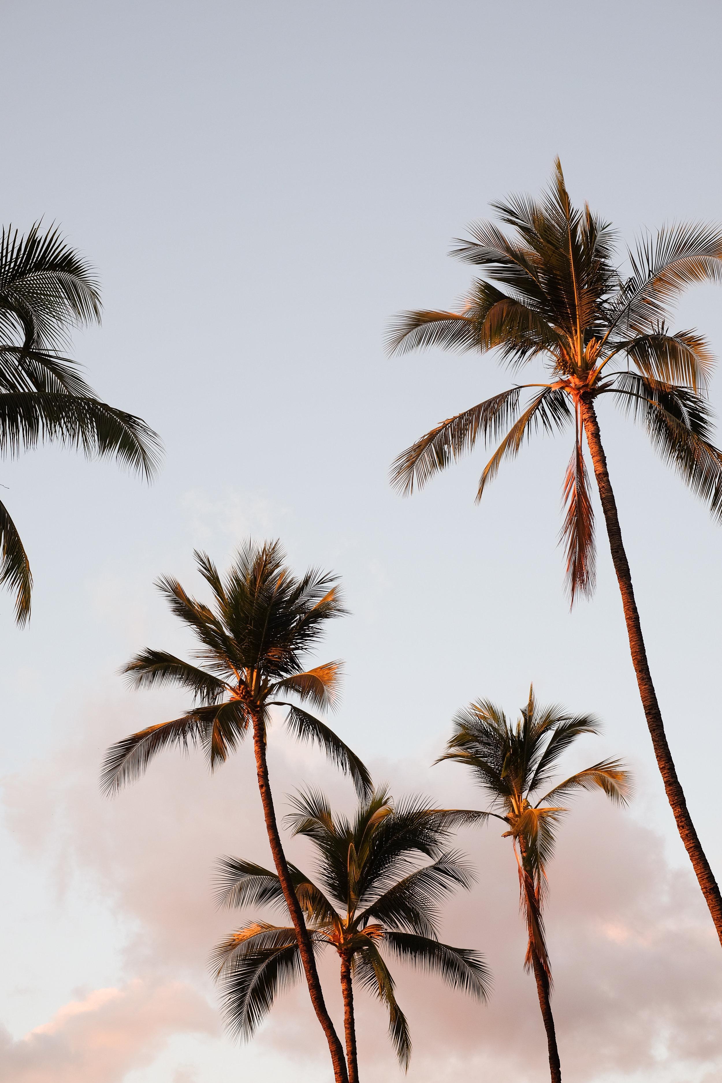 Maui-Hi5.jpg