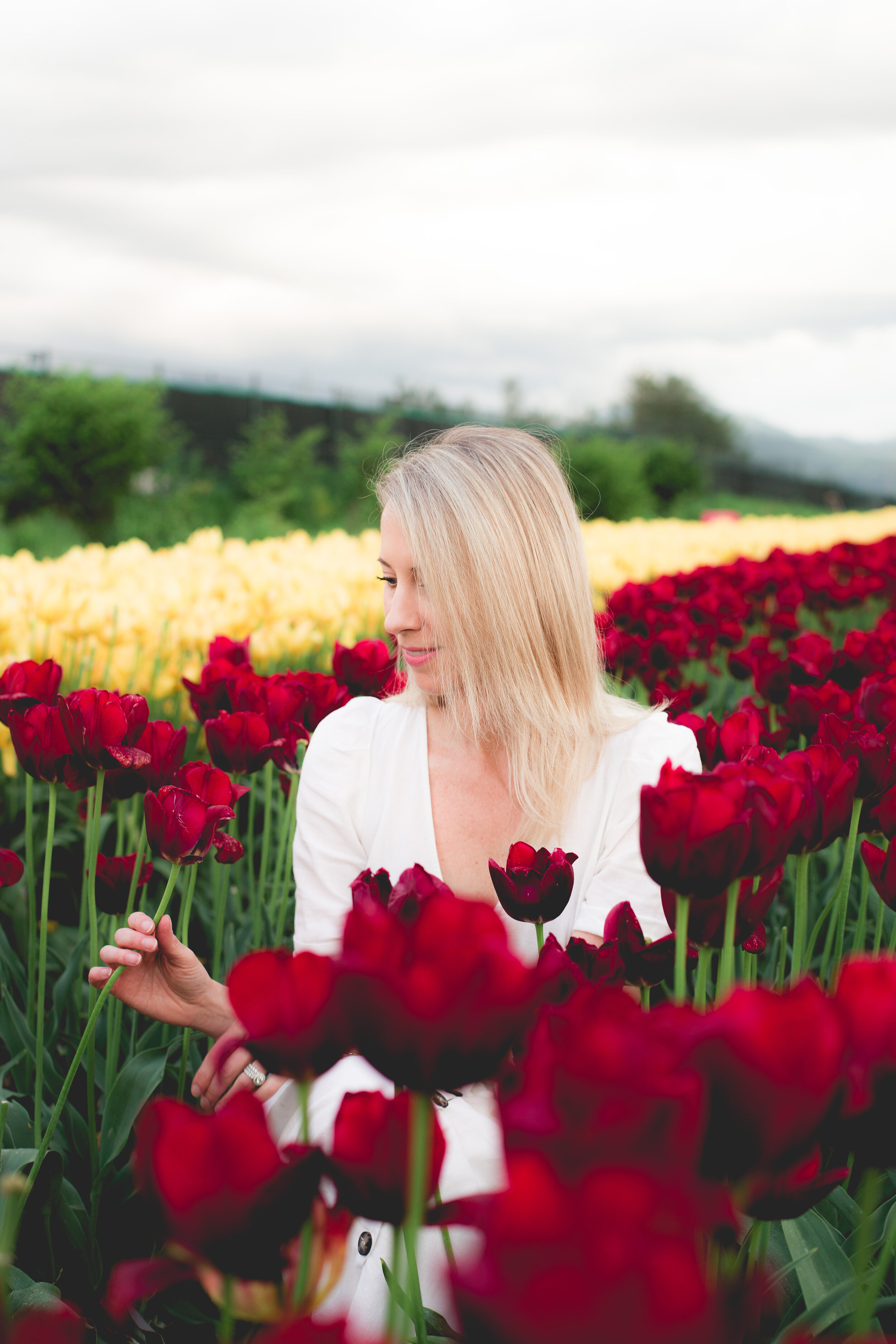 Mele-Tulips-107.jpg
