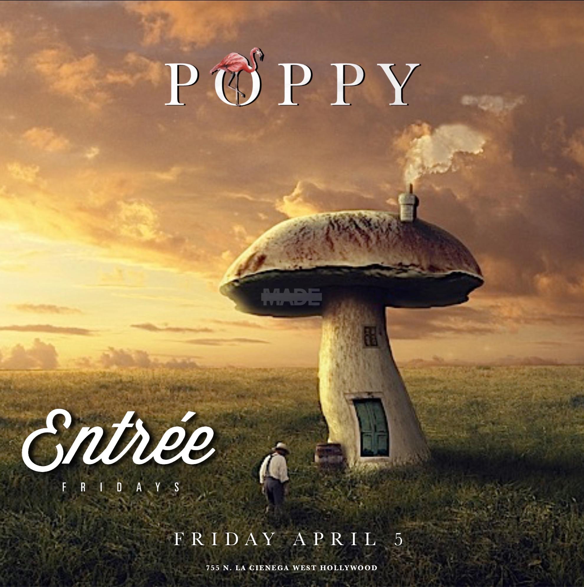 Poppy Friday4_55.jpeg