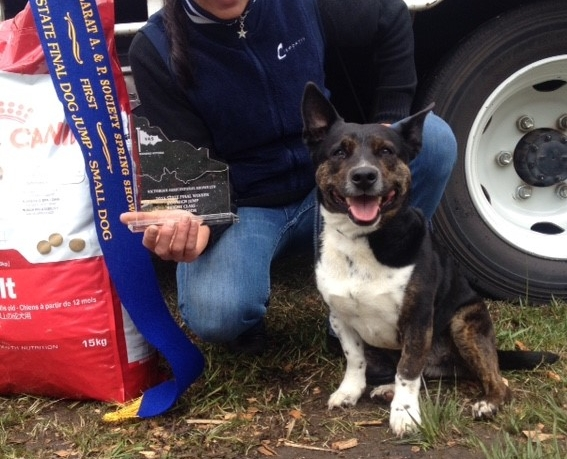 snoof takes home 1st prize for the small dog class