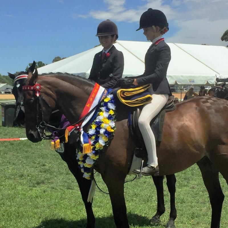 Champion Open large saddle galloway.jpg