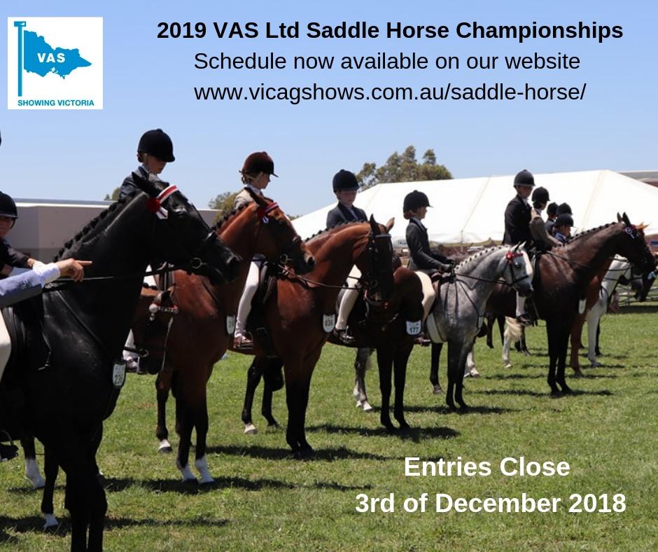Saddle Horse 1.jpg