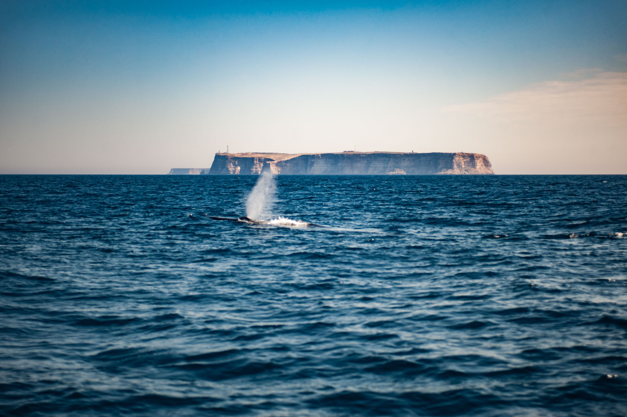A Fin Whale in front of Lampedusa Island. (Lampedusa, 2017/