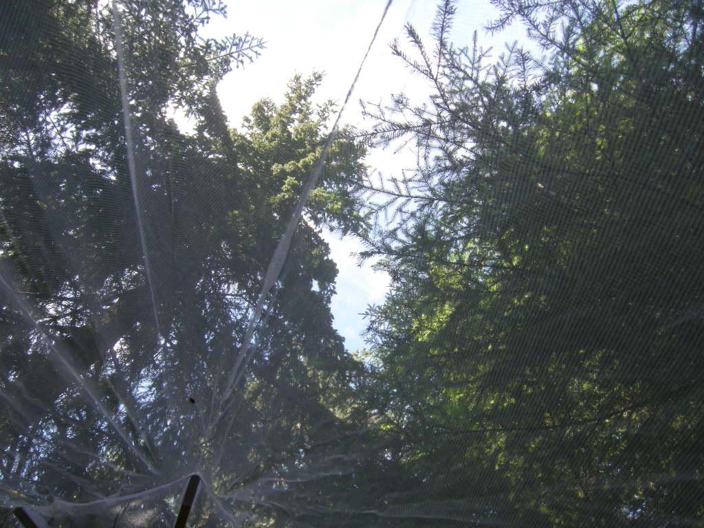 Ofta är det underbart att vakna under bar himmel i skogen (om nu det inte skett en väderväxling mitt under natten...), men...