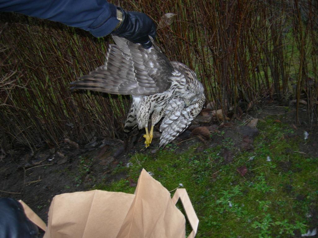 Vi lade snabbt ner fågeln i en papperspåse och placerade den i bilen. De två scouterna hade hört två skott, men inte sett något. De förstod vad som hänt. De grät. Vi förstod att de ringt polisen för att vi skulle rädda fågeln. Vi kom och de var glada. Sedan dödade vi fågeln! Det kändes jobbigt. Vi lade ned massor av energi och tid på att trösta dem. I slutändan verkade de förstå. Jobbet precis innan handlade om ett självmord. Det konstiga var att det var känslomässigt mycket jobbigare att trösta de två scouterna som var ledsna över den döda fågeln än de anhöriga till den som tagit livet av sig.