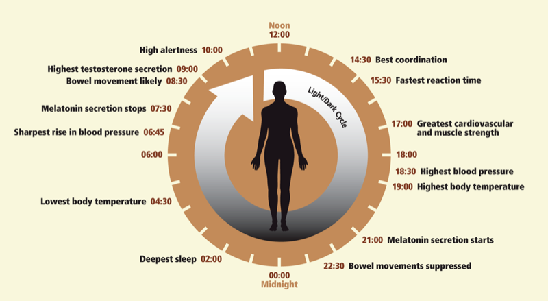 Circadian rhythms are physical, mental and behavioral changes that follow a roughly 24-hour cycle, responding primarily to light and darkness in an organism's environment.