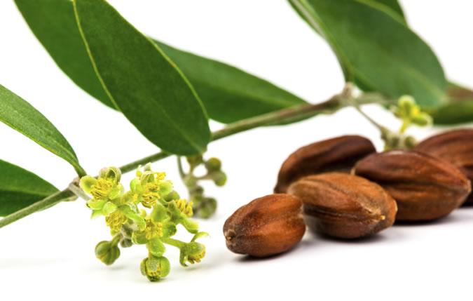 jojoba-seed-oil.jpg