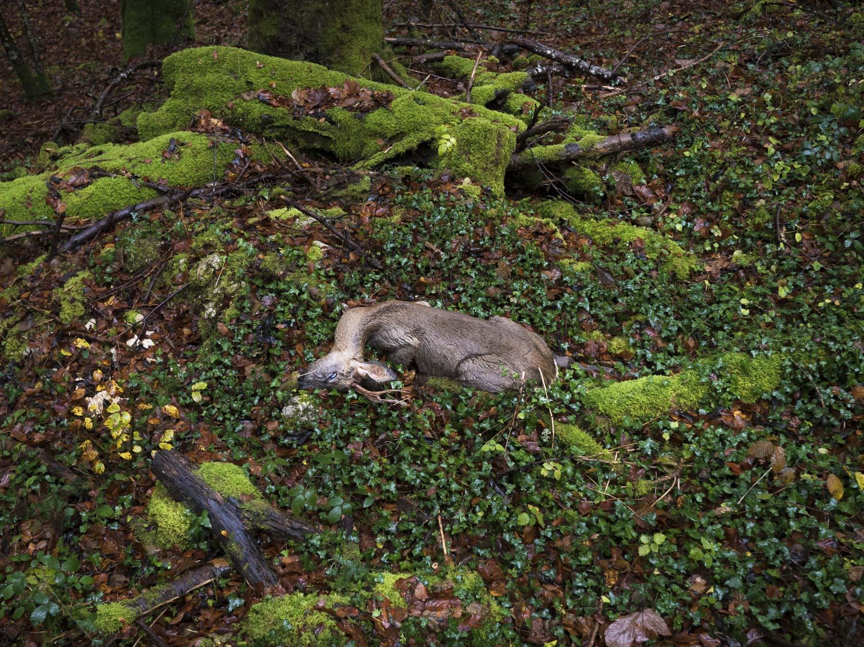 01-les-enfers-automne-franches-montagnes-_1130843-(c)-nicolas-brodard-.jpg