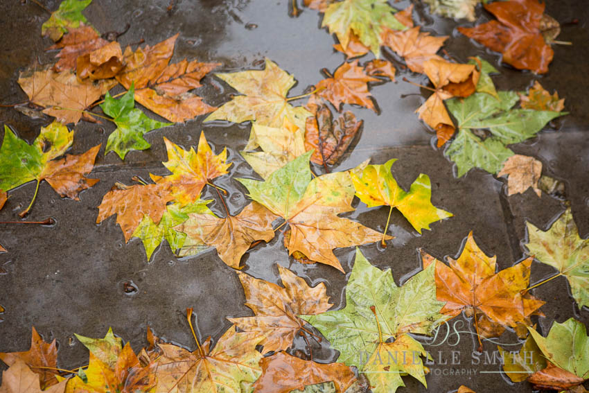 autumn leaves in a puddle at st pauls