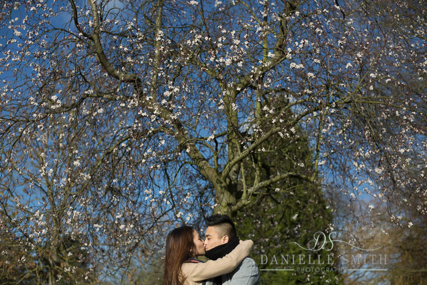 couple kissing under blossom