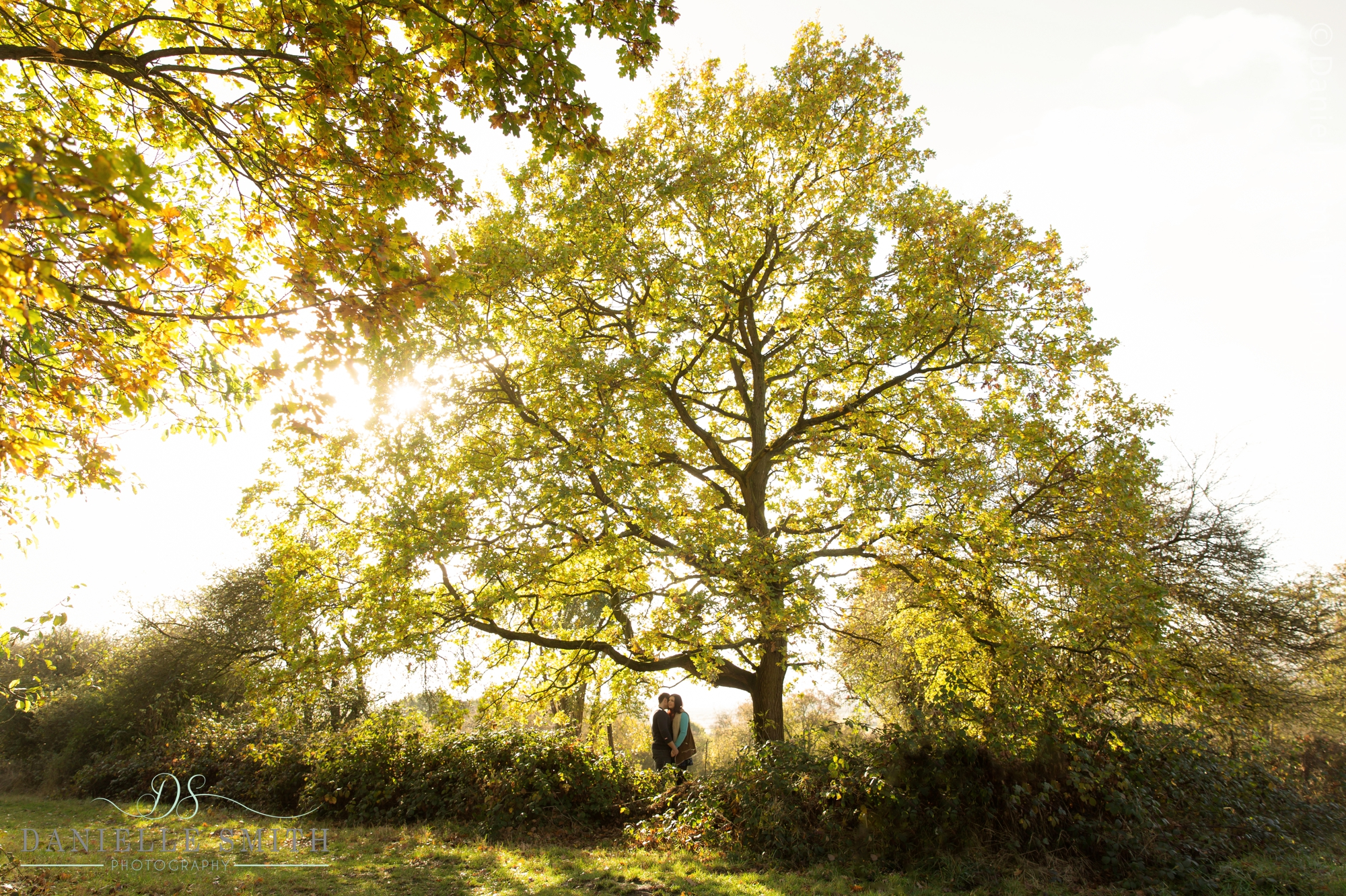 couple kissing under huge tree