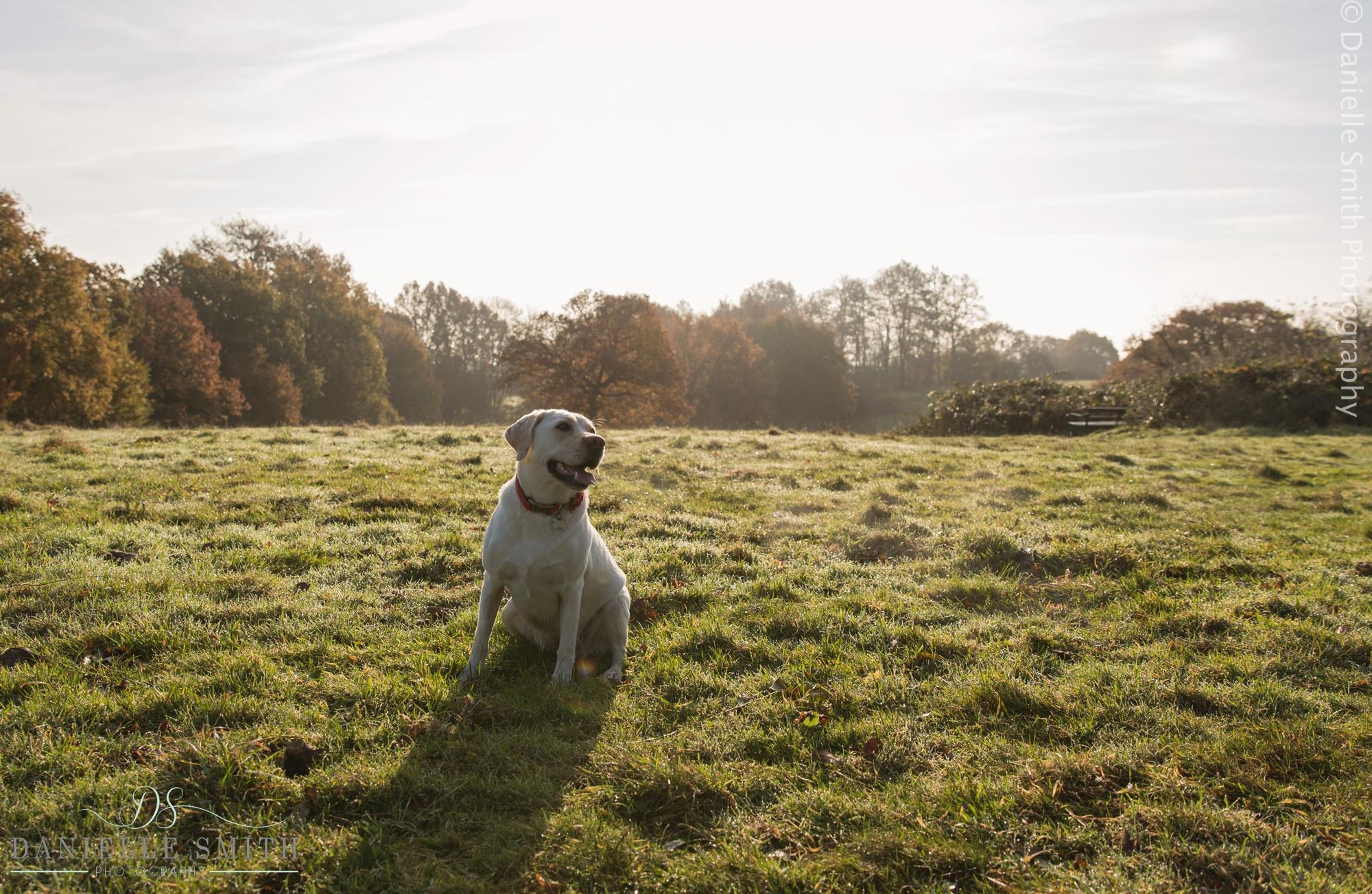 dog in winter sun - Pet photography