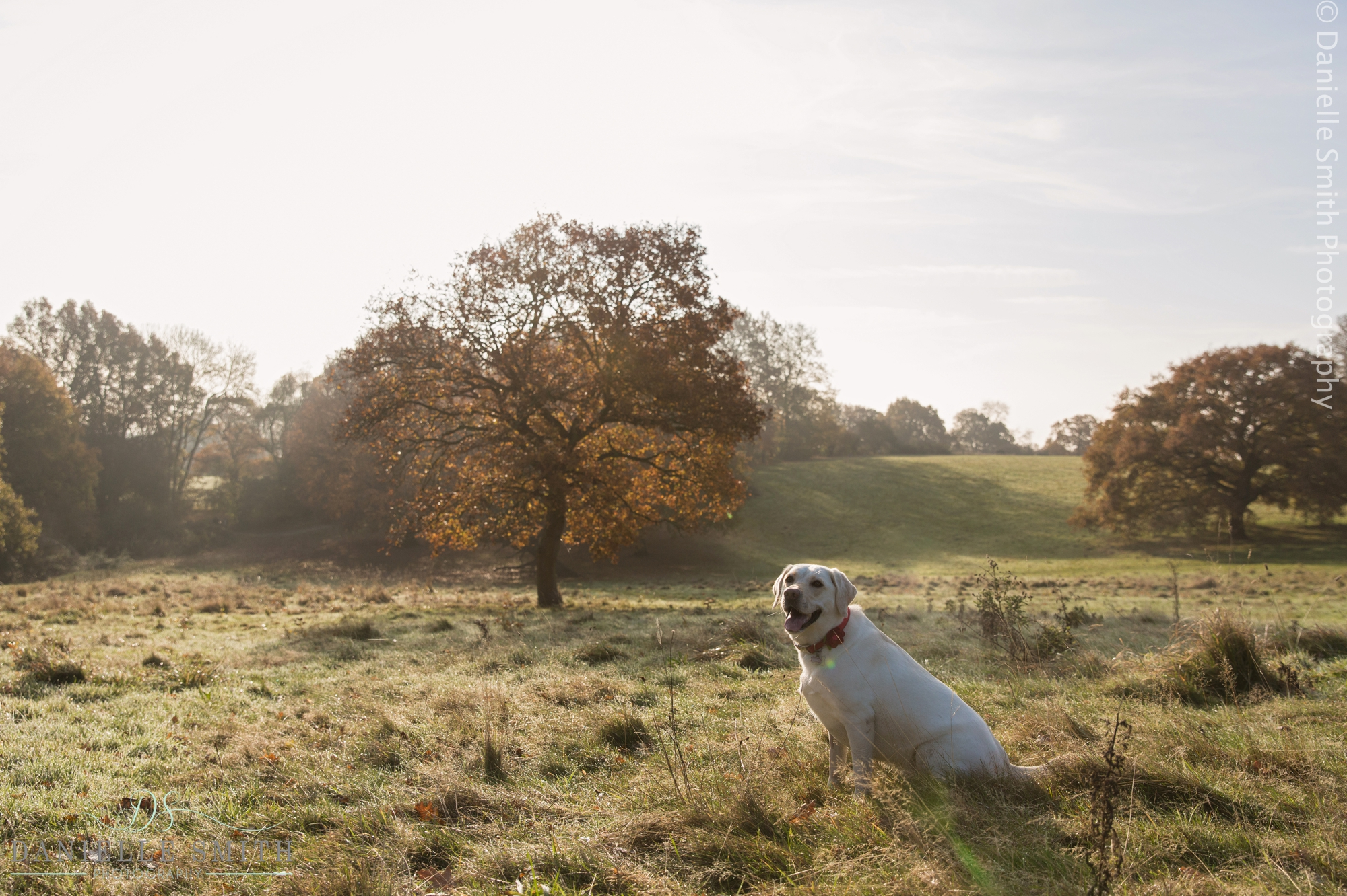 Pet photography in essex - dog in field