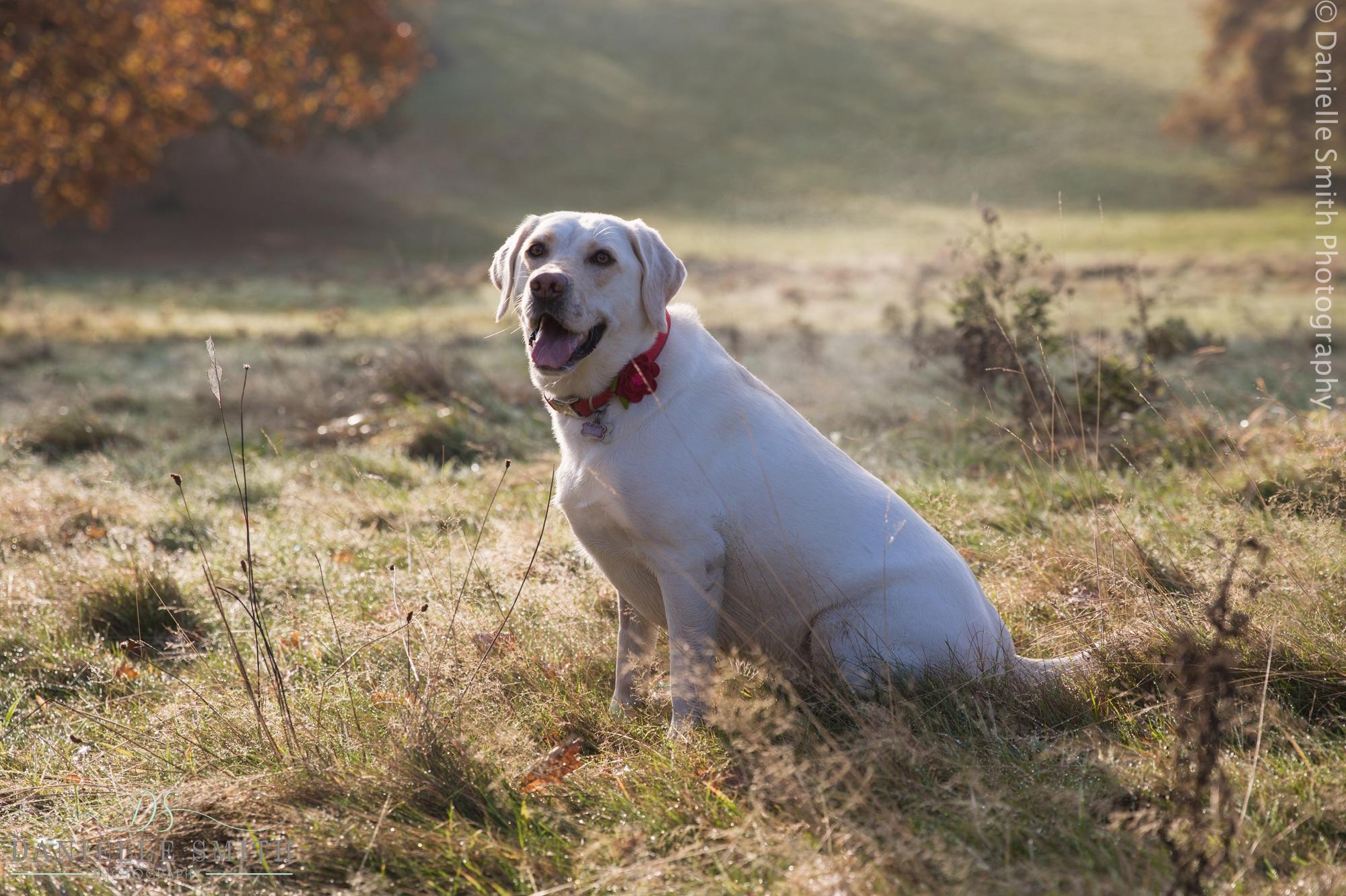 dog sitting in field - dog photos