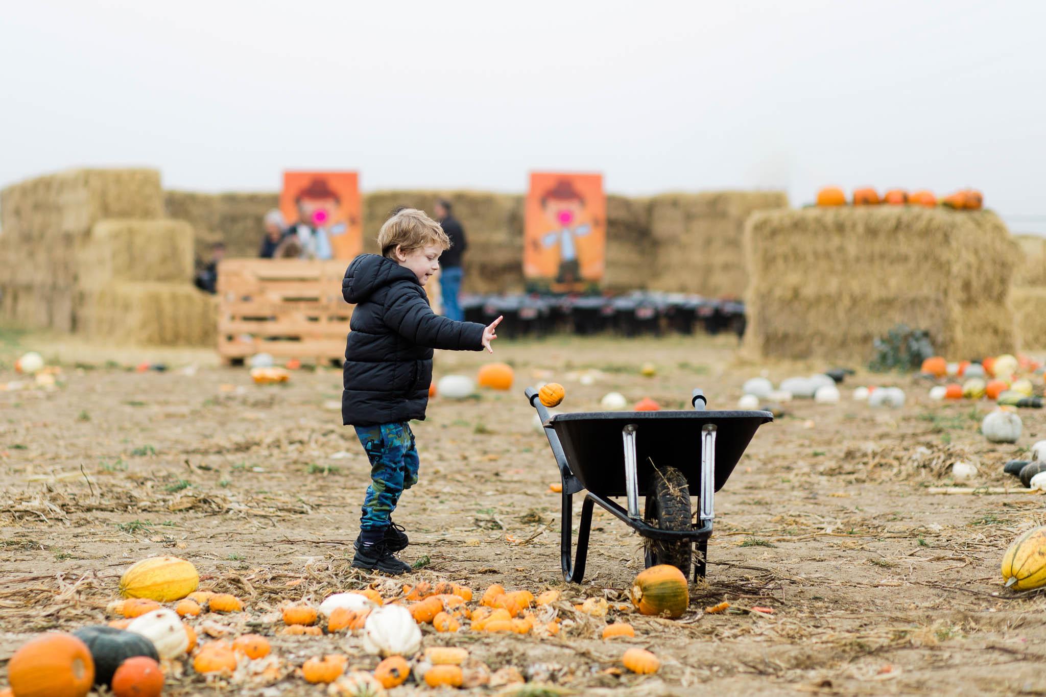 little boy with wheel barrow at pumpkin patch
