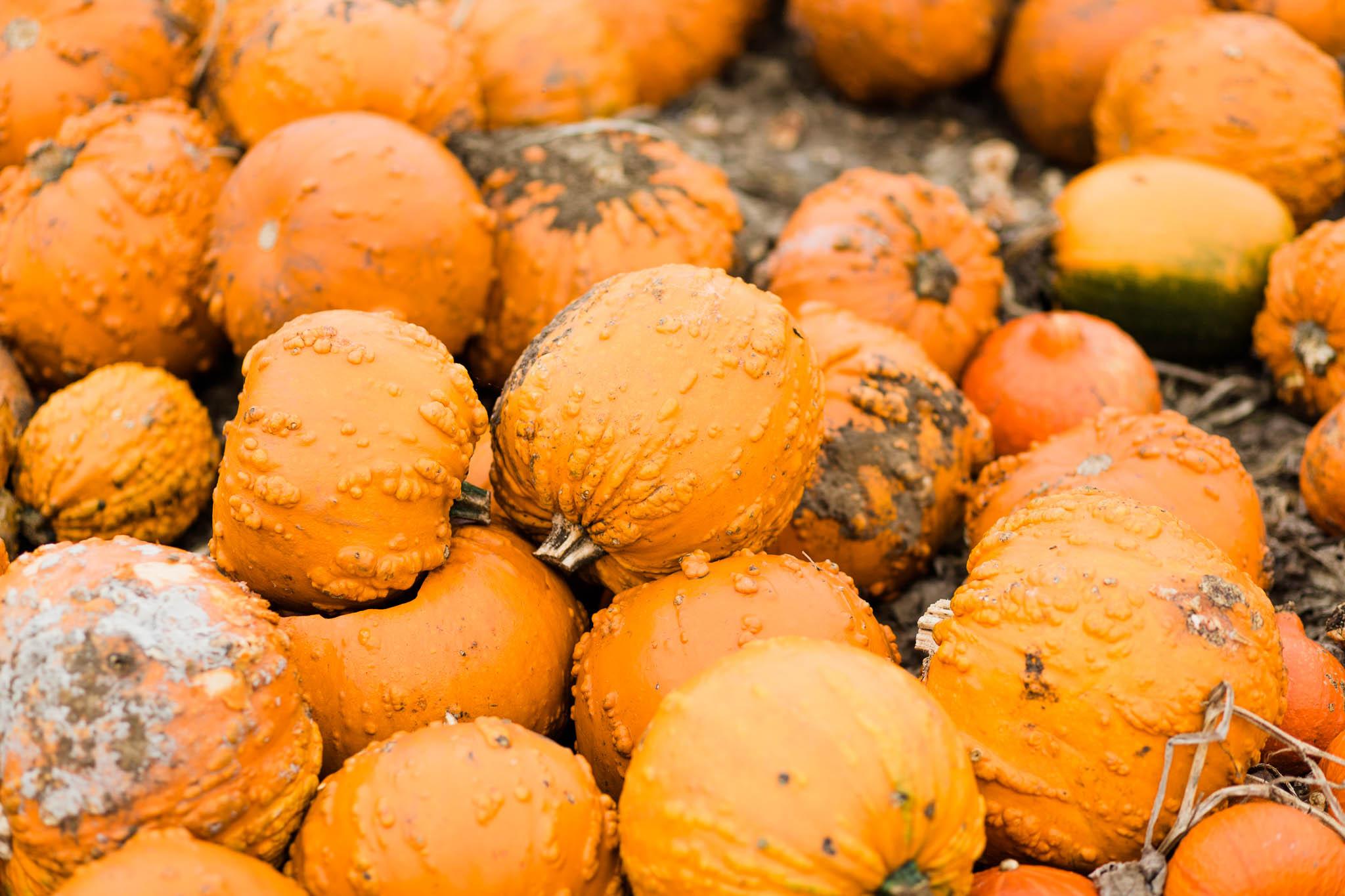 pile of orange pumpkins