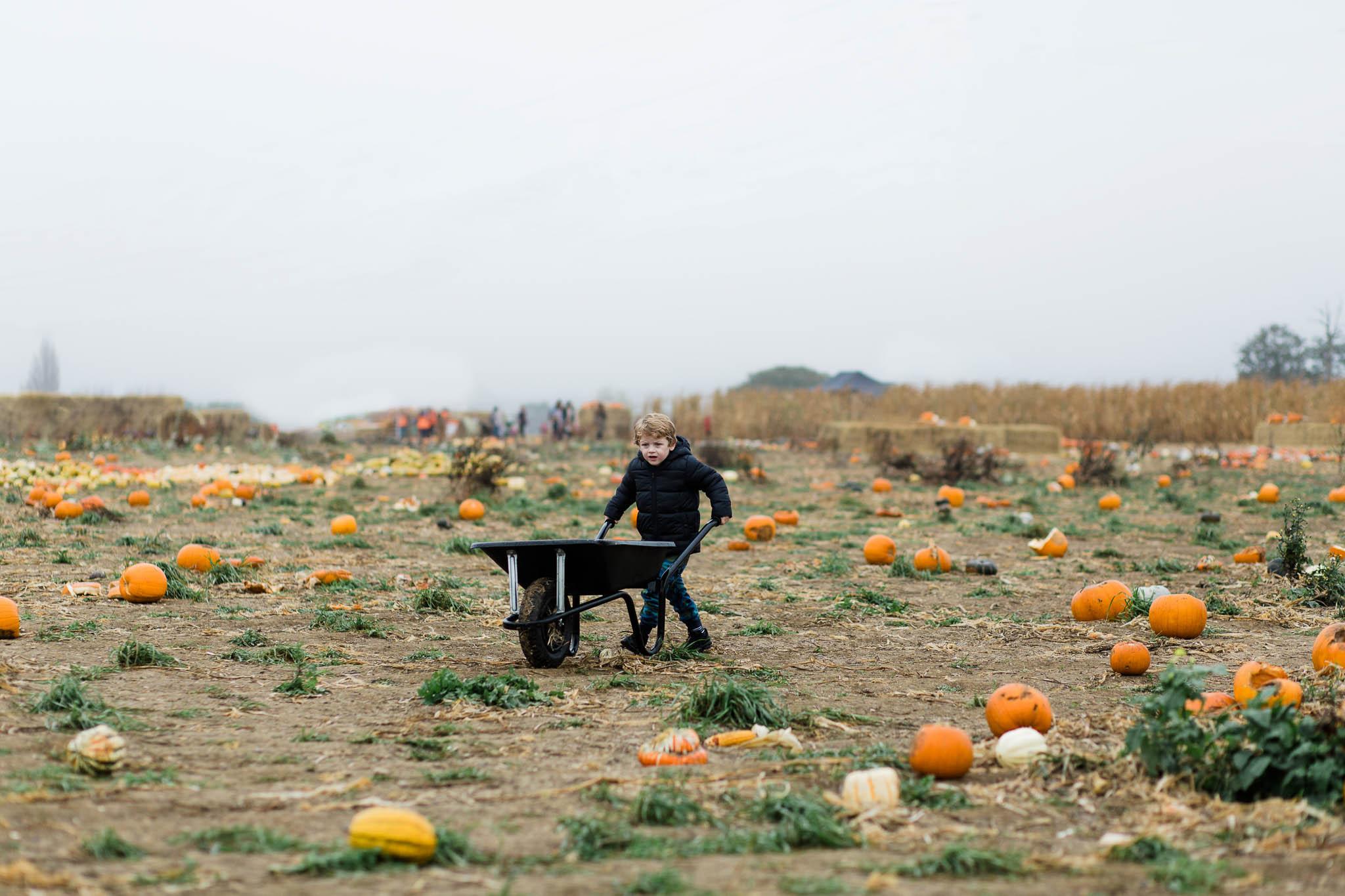 boy pushing his wheelbarrow at pumpkin patch