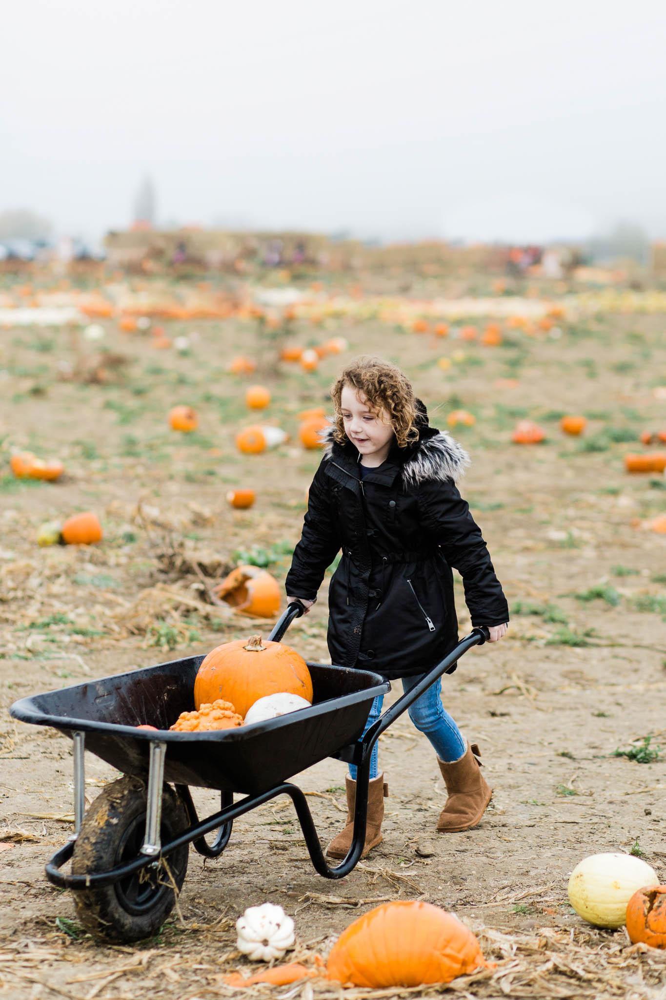 little girl with pumpkins in wheelbarrow