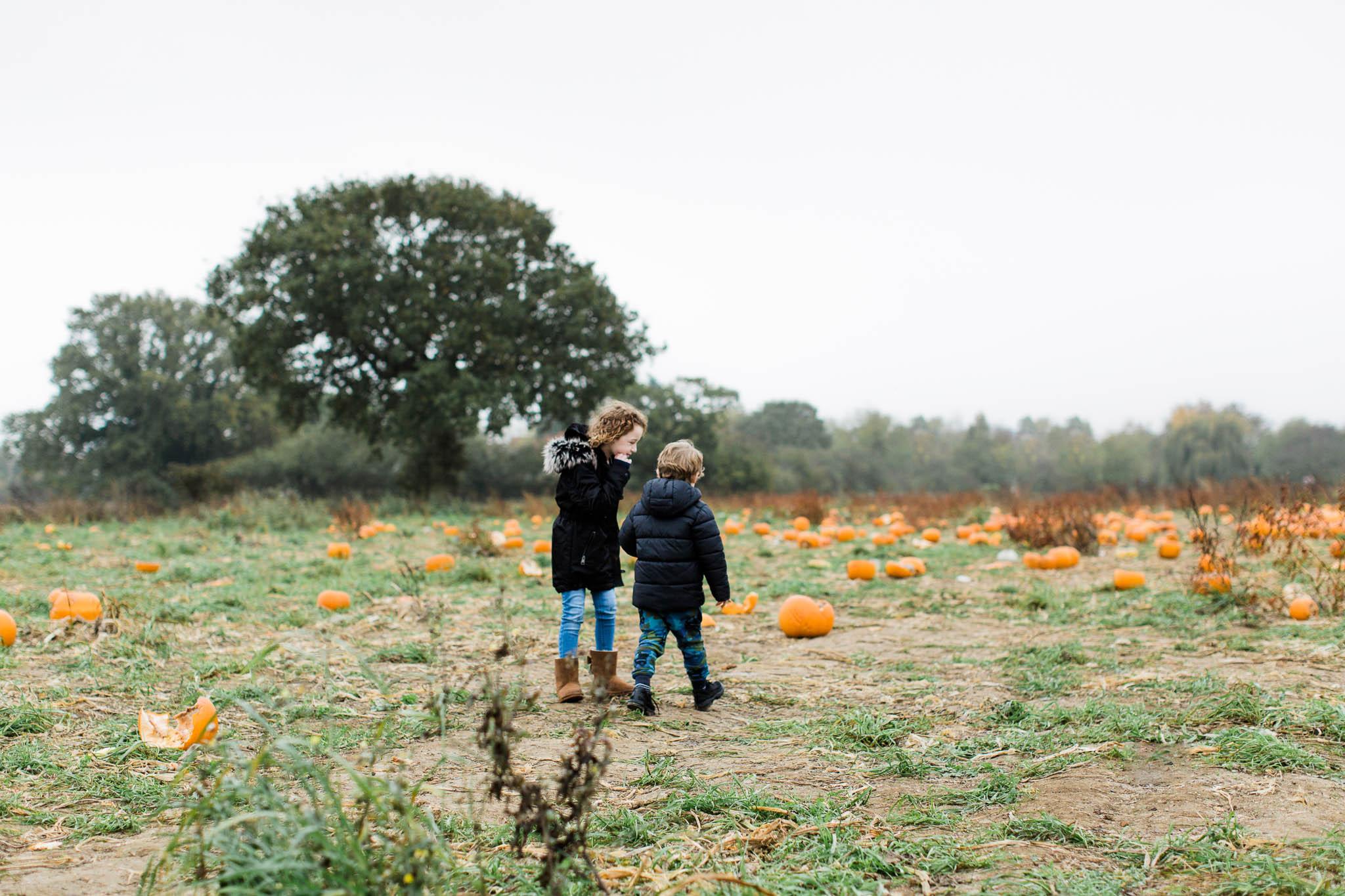 brother and sister walking through pumpkin farm