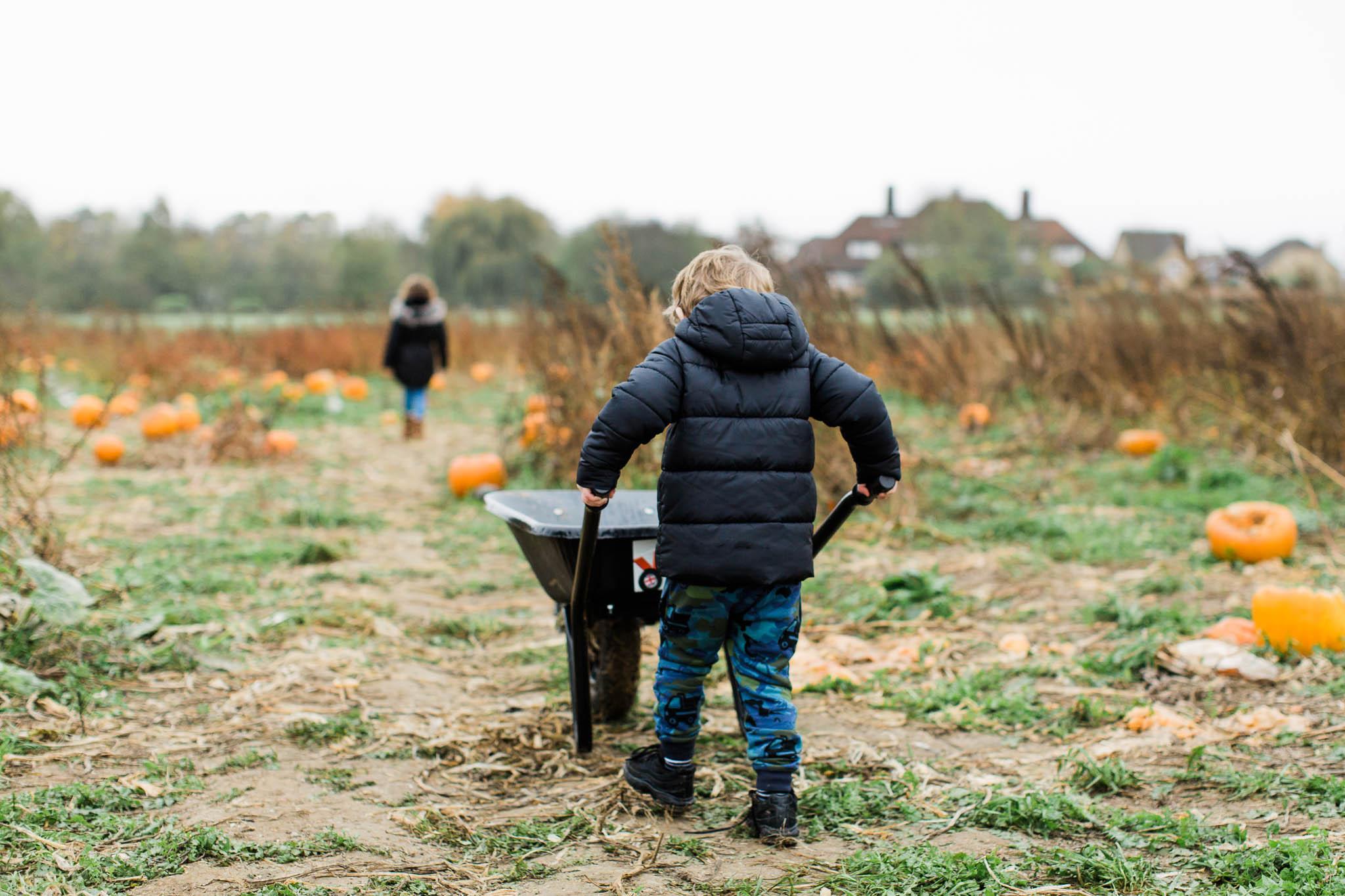 boy pushing wheelbarrow at pumpkin farm