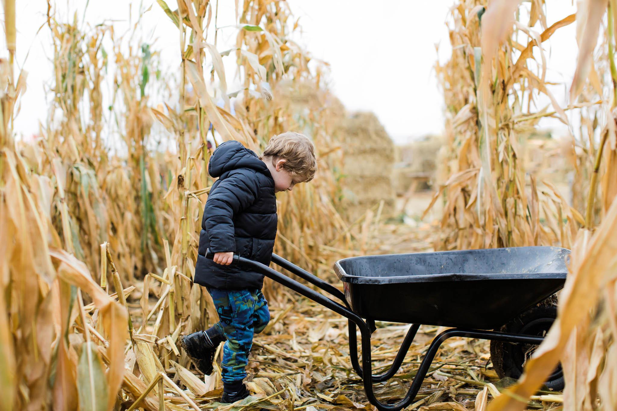 boy pushing wheelbarrow through cornfield