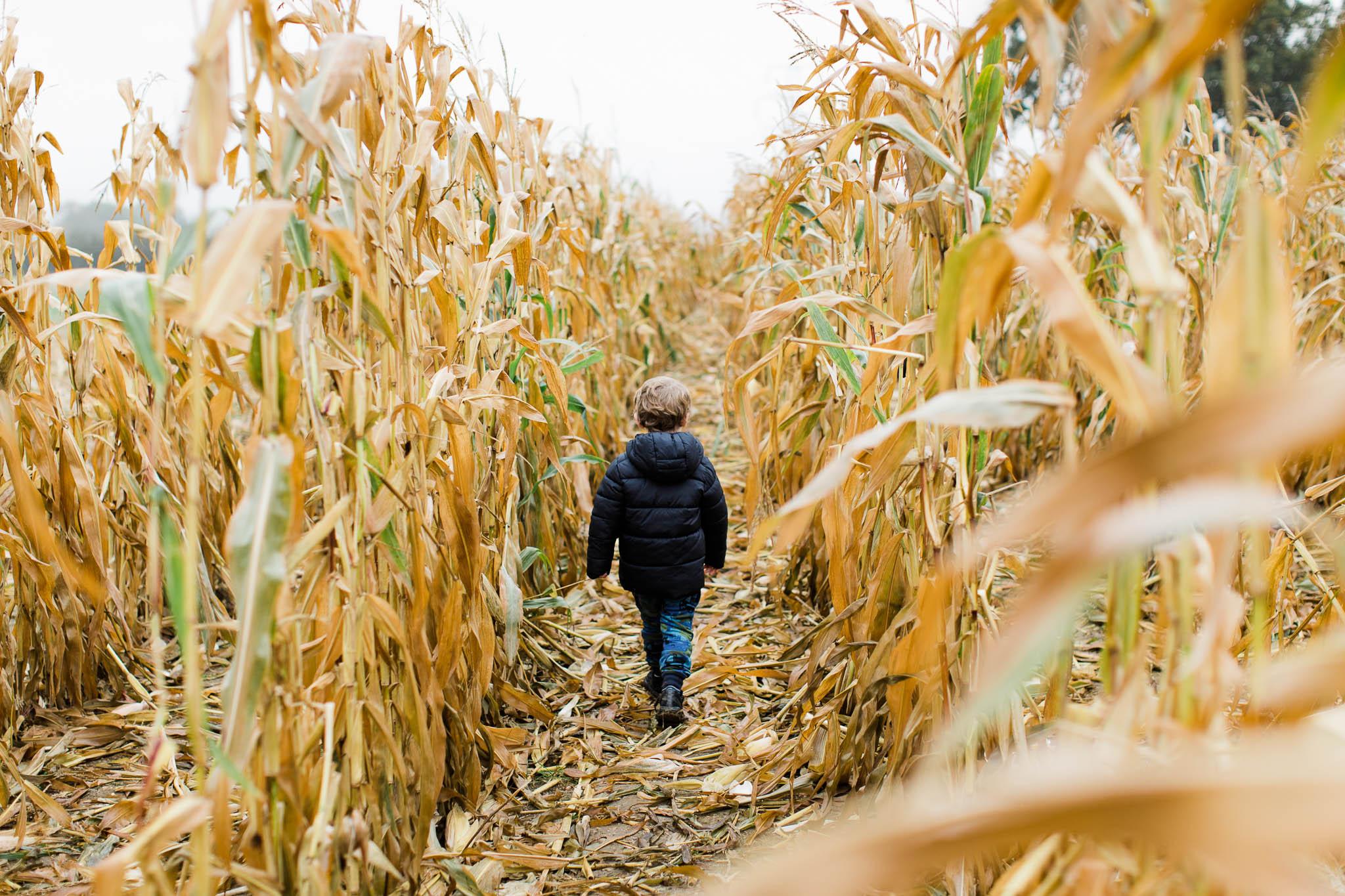 boy walking through cornfield