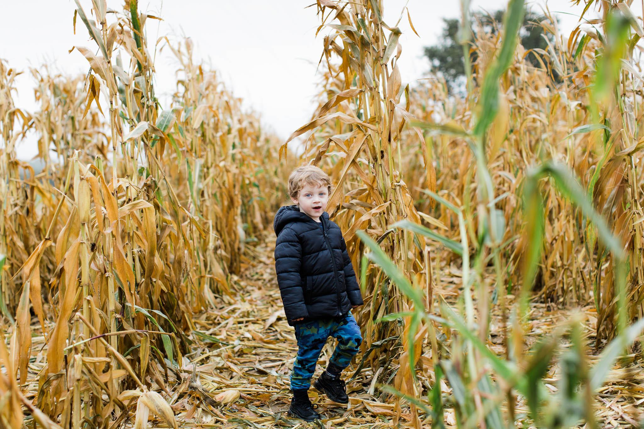 little boy in cornfield - essex family photos