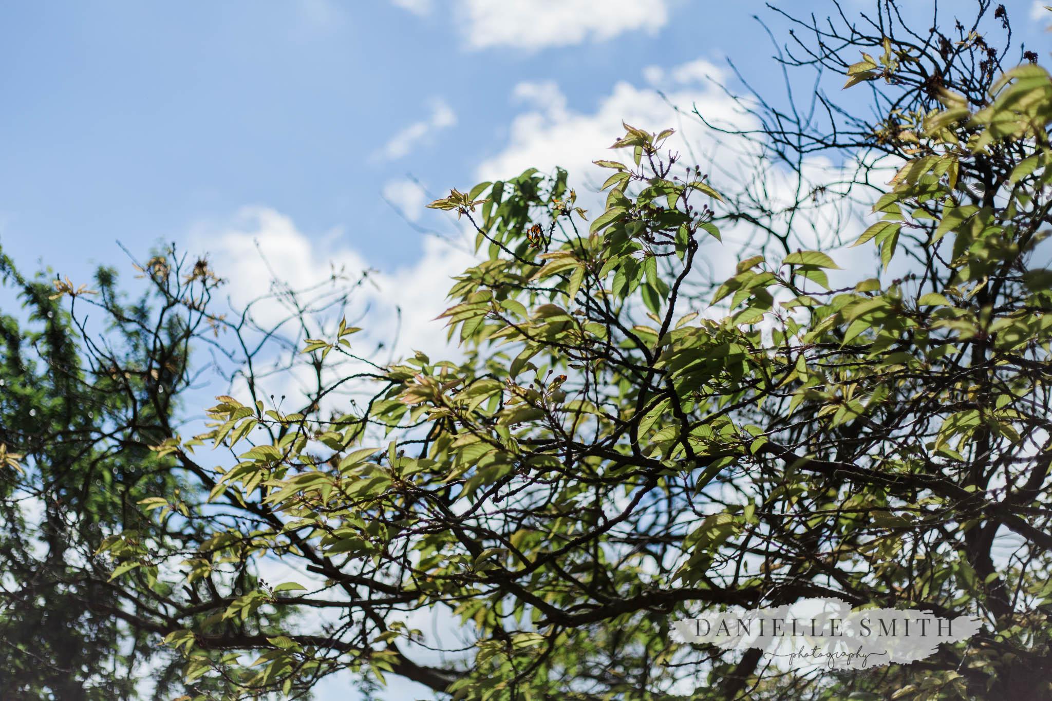 spring leaves at cooling castle kent