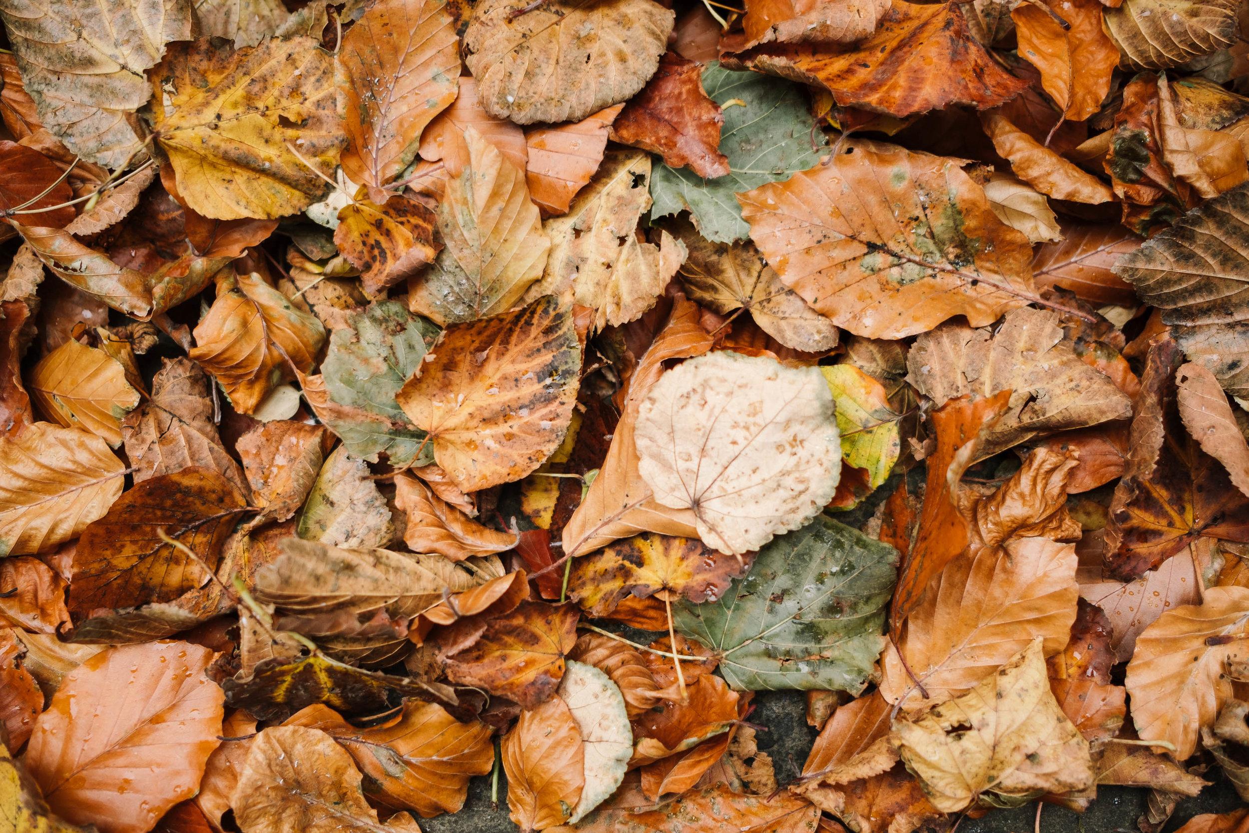 autumn leaves at the hospitium