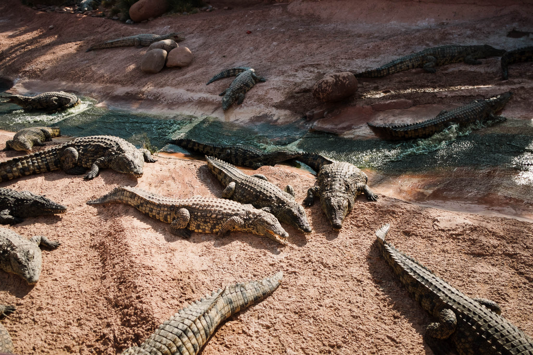 crocs sunbathing