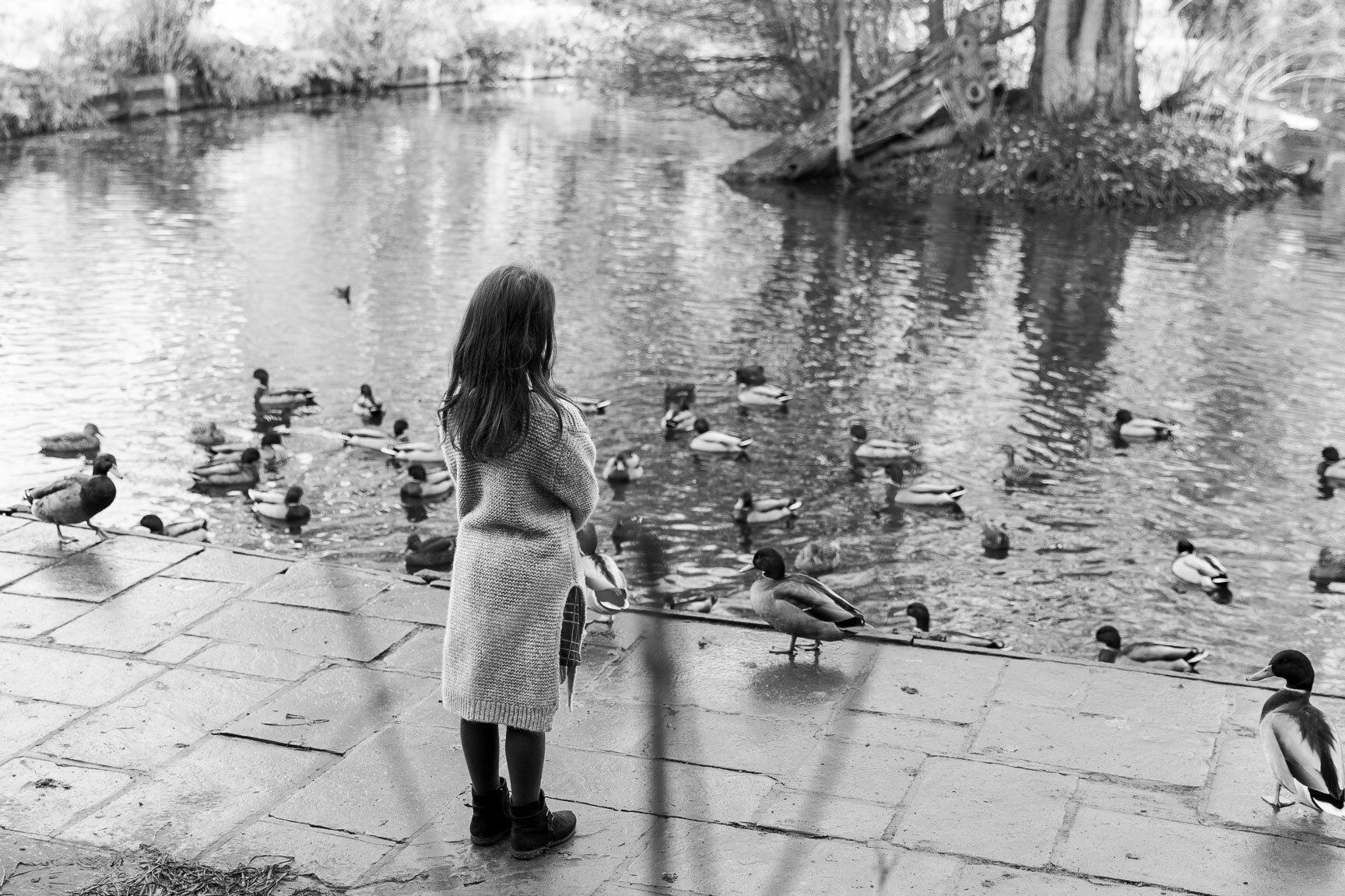 little girl looking at ducks