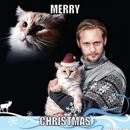 You're welcome ❤️ . . . #christmasday #skarsgard #christmasskarsgard #instacats #catsofinstagram