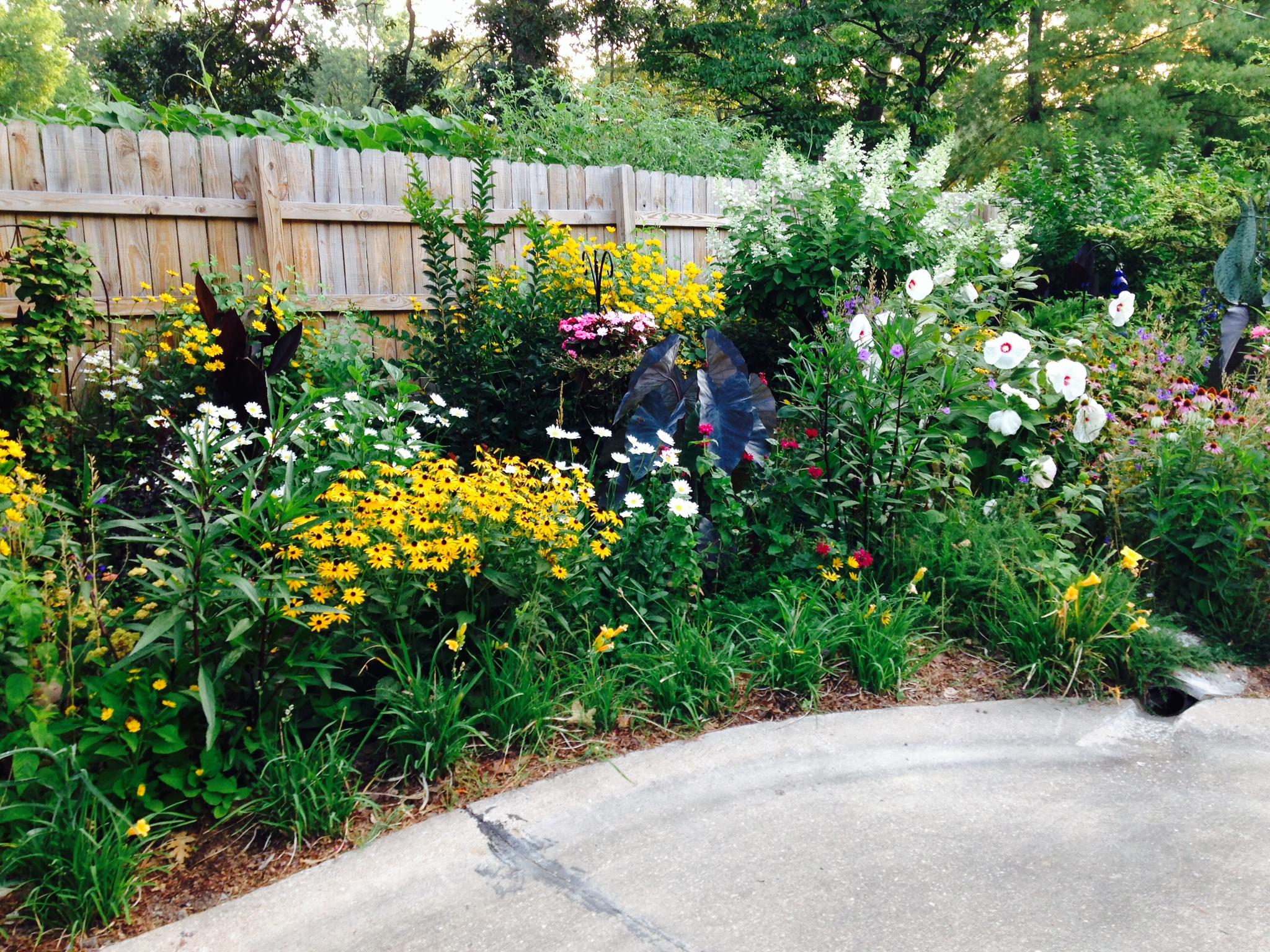 My favorite neighborhood garden