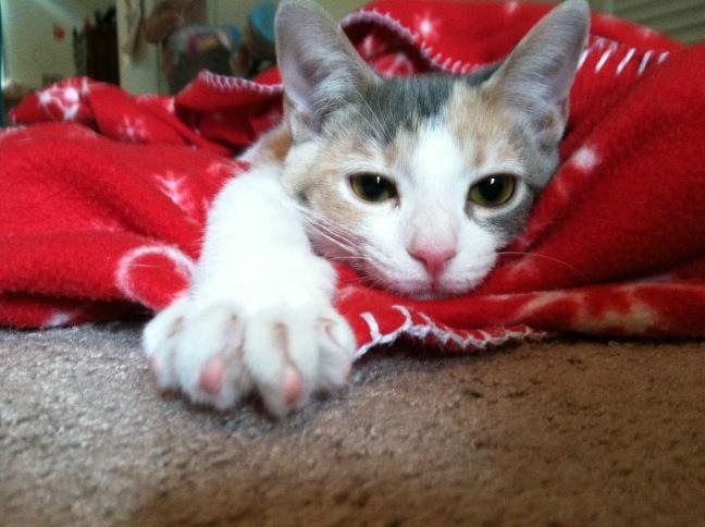 Cleo as a kitten