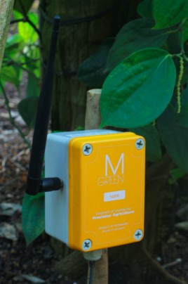 a Mimosatek product at a black pepper farm. photo credit: mimosatek