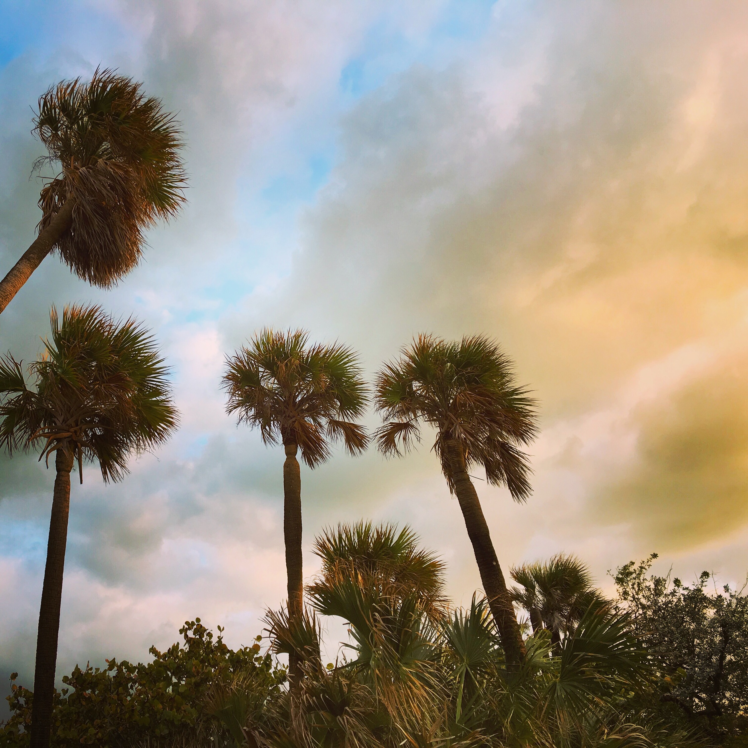 Daytripper365-Palm Trees in South Beach.JPG